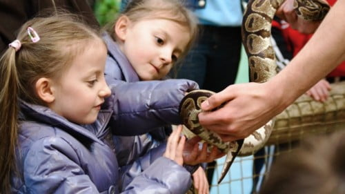 National Reptile Zoo Featured Photo