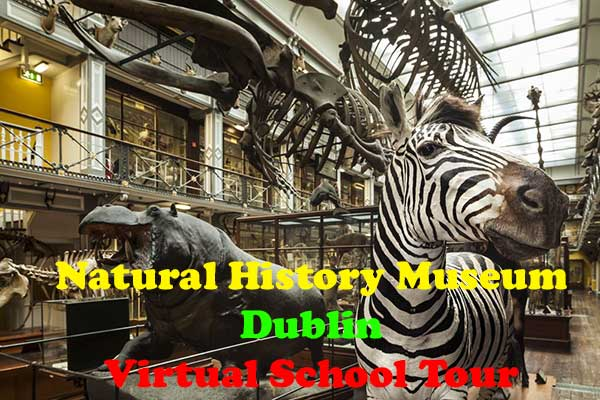 Natural History Museum Dublin – Virtual Tour