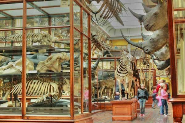 Natrual History Museum Worksheet   Cliste.ie