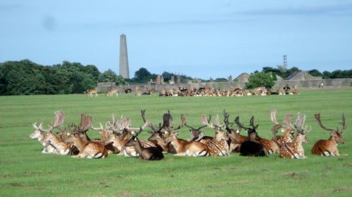 Phoenix Park Featured Photo