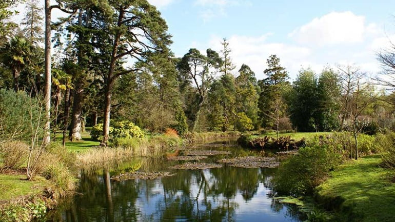 Fota Arboretum and Gardens Featured Photo | Cliste!