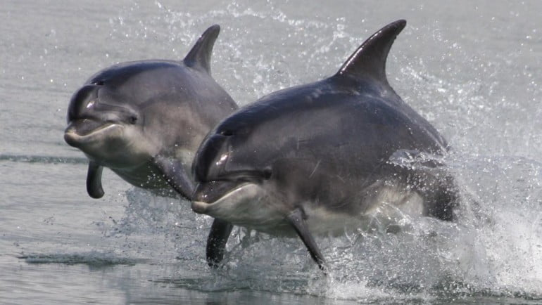 Shannon Dolphin and Wildlife Featured Photo | Cliste!